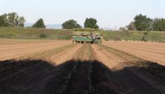 California Agriculture, Vegetable crops, readying flats Stock Footage