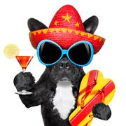 mexican dog - stock photo