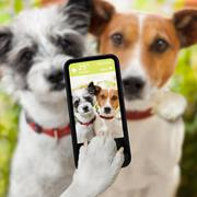 Selfie dogs Stock Photos