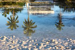 palm tree reflection in saltwater - stock photo