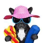 French bulldog  on vacation Stock Photos