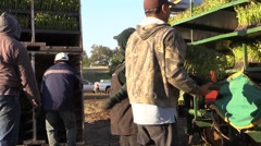 California Agriculture, Vegetable crops, workers Stock Footage