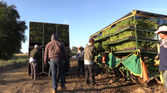 Stock Video Footage of California Agriculture, Vegetable crops, farm owner