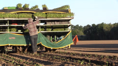 California Agriculture, Vegetable crops laborers - stock footage
