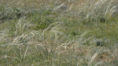 Feather grass background Stock Footage