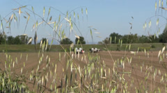 California Agriculture, Vegetable crops, farm equipment - stock footage