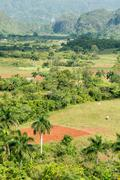 agriculture at the vinales valley in cuba - stock photo