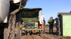 California Agriculture, Vegetable crops, reloading table Stock Footage