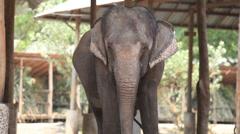 Southeast Asia elephant Stock Footage