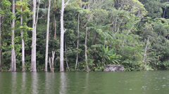 Lake Balinsasayao in Dumaguete. Negros Island, Philippines Stock Footage