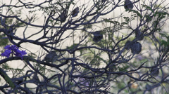 Sparrow in tree Stock Footage