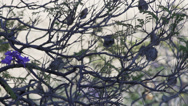 Stock Video Footage of Sparrow in tree