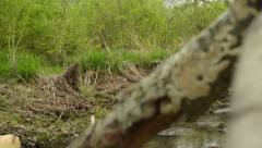 Stream in the Woods Stock Footage