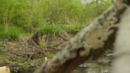 Stock Video Footage of Stream in the Woods