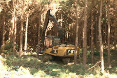 Machine tipping pine Stock Footage