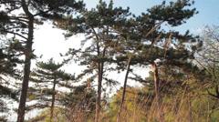 fabulous coniferous forest - stock footage