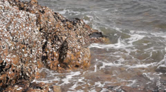 Rock, reef and waves Stock Footage