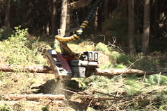 Machine sawing pine wood Stock Footage