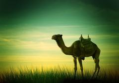 Camel in desert Stock Illustration