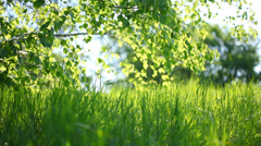 Summer park. Green grass, leaves and sunrays. - stock footage