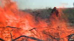 Fireman fighting a bush fire Stock Footage