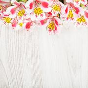 Pink flowers alstroemeria on light wooden background Stock Photos