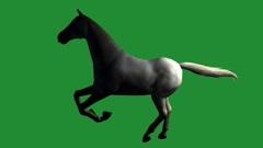 White horse foal pet running,farm animal wild life silhouette profile. Stock Footage