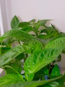 Stock Photo of leaf background.