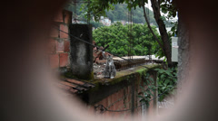 Favela cat Stock Footage