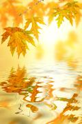 Maple leaf above a lake Stock Photos