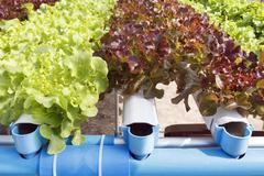hydroponic vegetable garden - stock photo