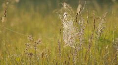 The big cobweb on the grass in the meadow, fresh atmosphere, close-up Stock Footage