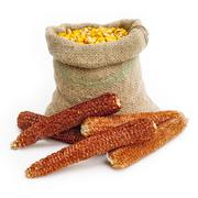 bag of corn kernels with corn cobs in front - stock photo
