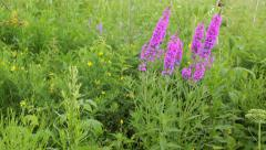 The meadow with colorful wild flowers in summer, frehness Stock Footage
