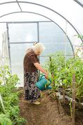 the old woman in a hothouse - stock photo
