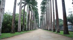 High palm trees botanic garden Stock Footage