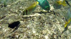 Video of a tropical Fish on a coral reef Stock Footage