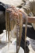 Just the caught octopus in hands, estepona, andalusia, spain Stock Photos