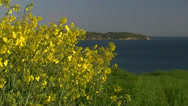 Stock Video Footage of Rape Seed Field - Rügen Island - Baltic Sea, Northern Germany
