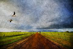 Country road and birds in old style Stock Photos