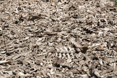 All dead animal bones Stock Photos