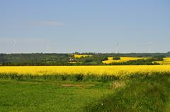 field of oilseed rape - stock photo
