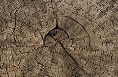 Old wood with annual rings Stock Photos