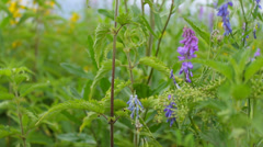 Camera moving away from stinging nettles and wild flowers in the meadow, calm Stock Footage