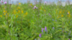 Camera gets closer to the stinging nettles and wild flower in the meadow, calm Stock Footage