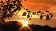Stock Video Footage of Sunrise Golden Orange Branches and Flares