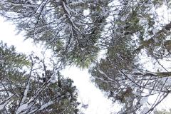 Trees in winter at Urals, Russia Stock Photos