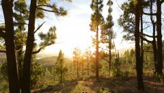 Forest landscape at sunset Stock Footage