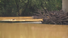WS muddy river and log jam at bridge support Stock Footage