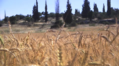 Wheat field m.s right treck Stock Footage